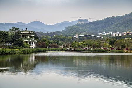 深圳的公园图片
