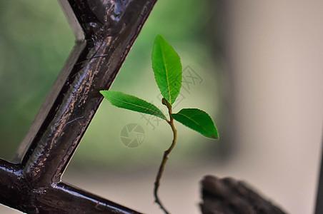 窗户上的绿苗图片