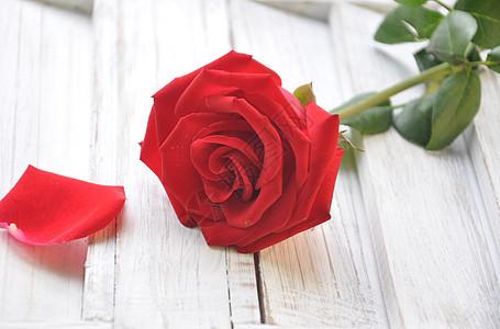 玫瑰花的花瓣图片