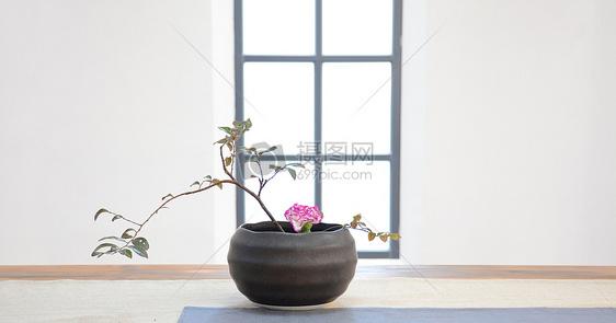 花卉月季插花养花盆栽园艺图片