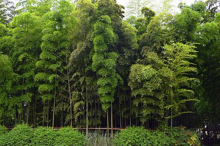 葱葱郁郁的竹林图片