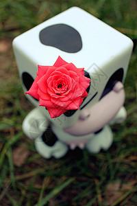 戴玫瑰花的母牛图片