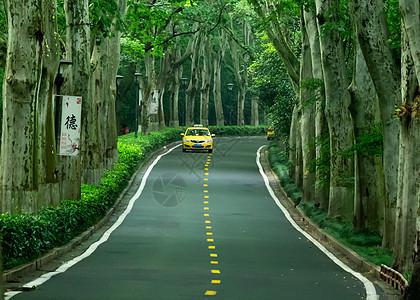 绿色森林的林中小道图片