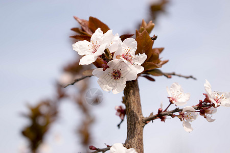 白色的花图片
