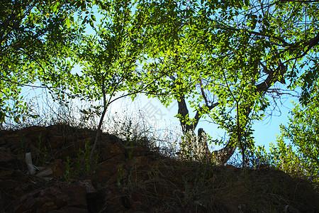 树叶子图片