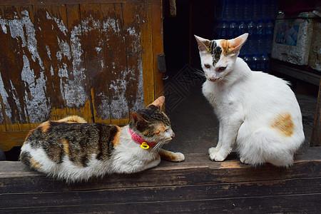 门槛上的两只小猫图片