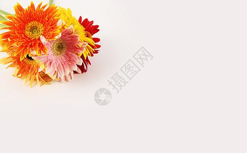 多彩太阳花图片