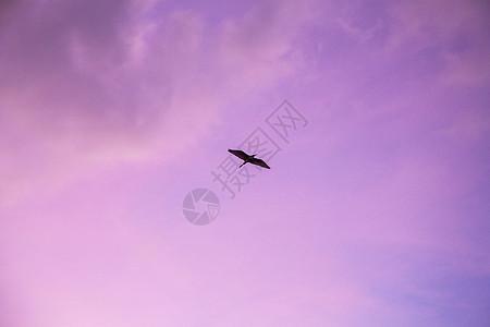 一只飞鸟图片