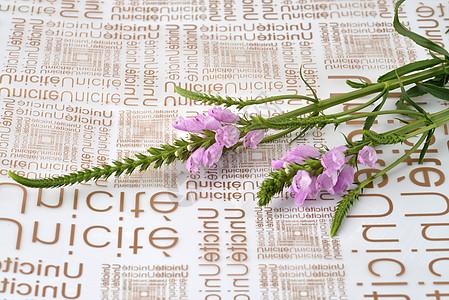 英文海报上的凤尾花图片