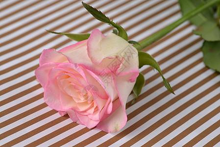 淡粉色玫瑰七夕图片