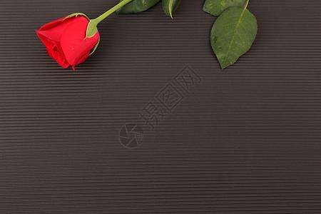 红色玫瑰七夕黑色背景摆拍图片
