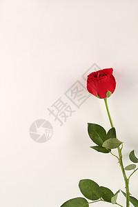 红色玫瑰七夕白色背景摆拍图片
