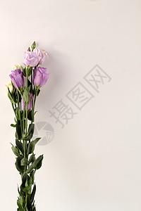 紫色桔梗图片