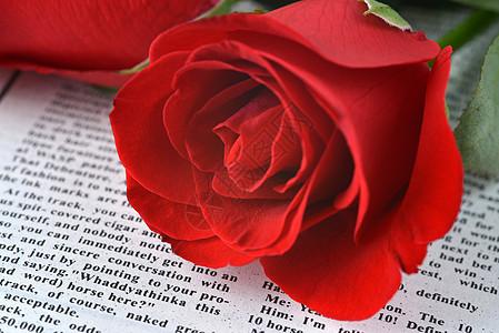 报纸上的红色玫瑰图片