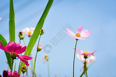 淡粉色的花图片