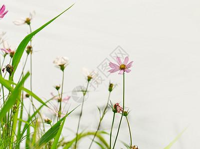 白背景前的花卉图片