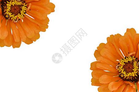 白背景上的橘色的话图片