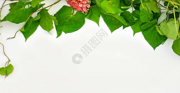 绿叶背景图片