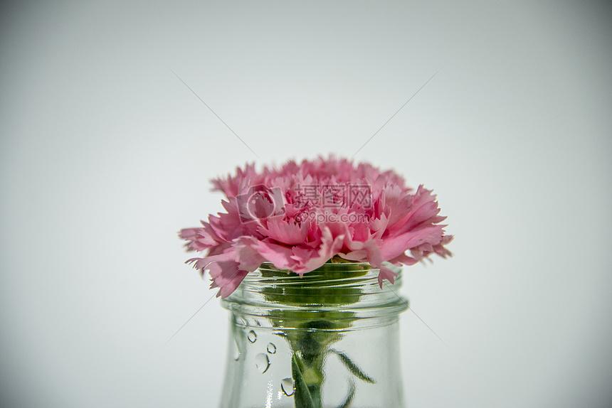 一枝花图片素材_免费下载_jpg图片格式_vrf高清图片