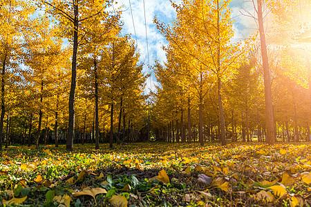 落叶林间小路图片