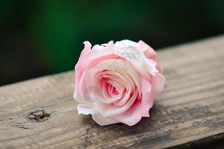 粉红色的花图片