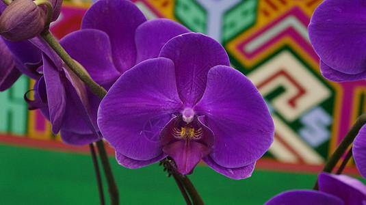 美丽的兰花图片