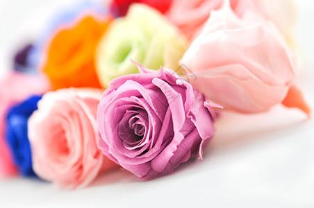 彩色玫瑰图片