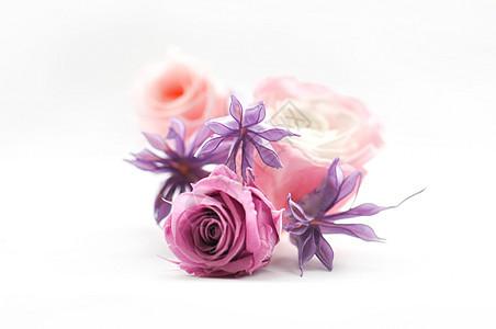 彩色玫瑰花图片