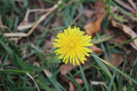 黄色小花图片图片