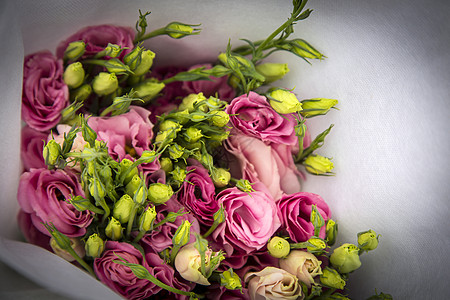 漂亮的玫瑰图片