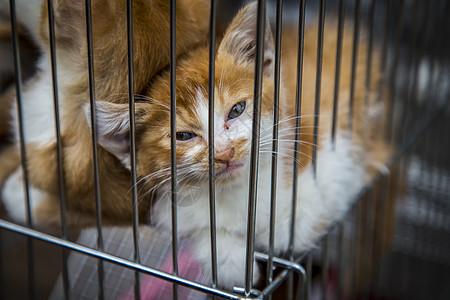 救救猫咪图片