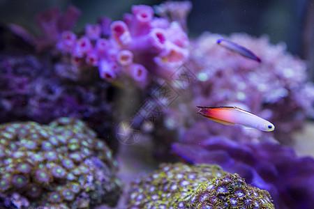 水下的鱼图片
