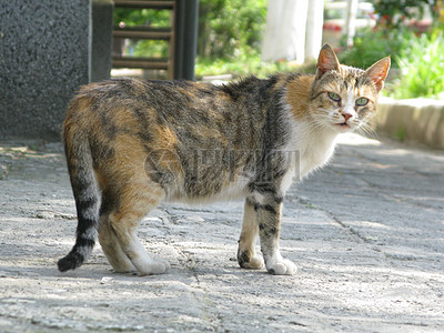路上的一只猫图片