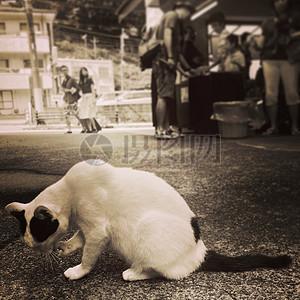 街上蹲着的一只猫图片