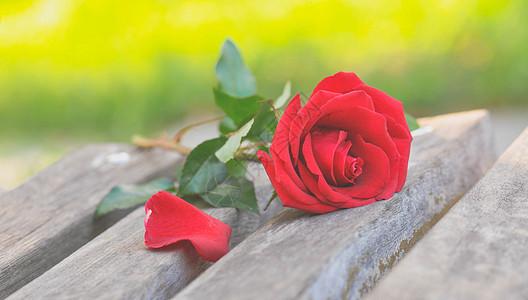 凳子上的一支玫瑰图片