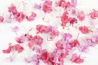 花瓣背景图片