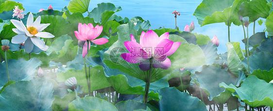 夏天荷塘粉色荷花摄影图片