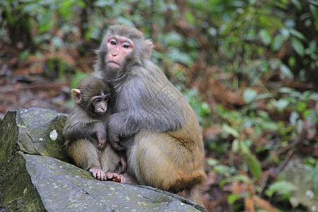 猴子母爱图片