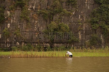 水稻插秧的人图片
