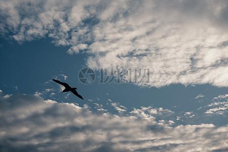 晴朗天空下的一只鸟图片