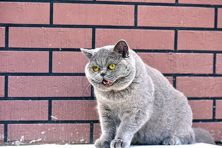 可爱蓝猫宝宝图片