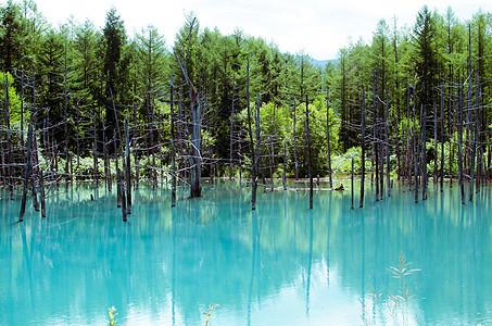 北海道美瑛景点青池图片