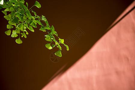 光影·红墙图片