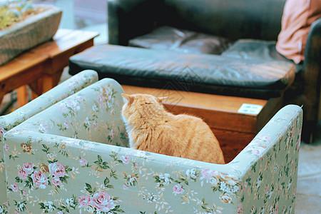 安静的猫图片