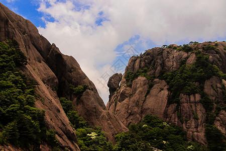黄山 云海 山峰 矮树 蓝天 白云图片