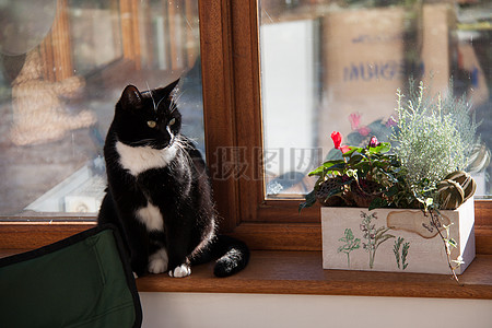窗台边上的一只猫图片