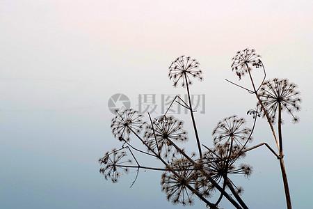 天空下的野生植物图片