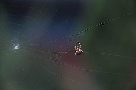 蜘蛛结网图片