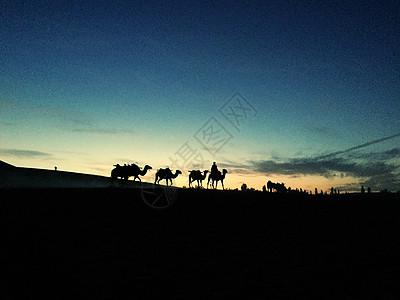 归家的骆驼图片