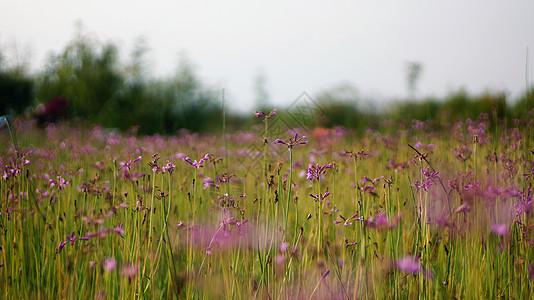 野花丛图片